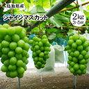 【予約販売】シャインマスカット【進物用】!約2kgセット(3...