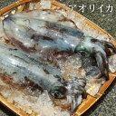 送料無料【スピード出荷】鳥取県産 アオリイカ[生]1kgセット(3杯で合計1kg程度入り)【お刺身・天ぷら♪】