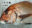 送料無料【スピード出荷】天然真鯛[生] 1匹(3kg前後)鳥取県産【お刺身・塩焼きに♪】