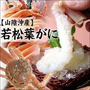 2ヶ月しか獲れない貴重な美味しいカニ【早期予約】[活生]お刺身が最高です♪〔若松葉ガニ〕[足...
