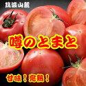 筑波山麓!「噂のトマト」