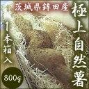 自然薯(じねんじょ)1本入約800g 茨城県鉾田市産