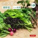 サラダ セット 化学肥料・農薬不使用 ミニ根菜つき わさび菜 水菜 ほうれん草 こまつな  無農薬野菜