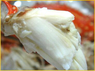 【送料無料】【訳あり・爪折れ】愛知 南知多 伊勢湾産 活〆渡り蟹【ワタリガニ・ガザミ】 オス 1kg (3匹〜5匹)