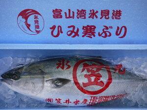 【送料無料】【ひみ寒ぶり宣言】 富山湾 天然・氷見の寒ブリ【ひみ寒ぶり】 10〜11kg以上