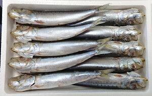 愛知 豊浜産 まると水産 真いわし丸干し 10尾 4枚 合計 40匹 鰯 いわし カルシウム