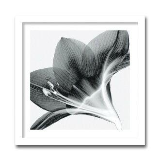 在有供藝術面板孤挺花Steven N.Meyers壁面裝飾使用的藝術海報花卉畫額頭的海報繪畫花紋客廳廚房餐廳門口裝上的墻壁裝飾黑白黑單調繪畫