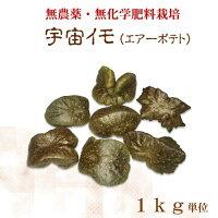 自然栽培宇宙イモ/厳選形の良いエアーポテト1kg商品画像