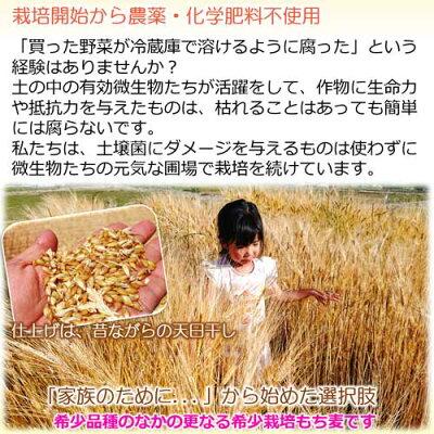 無農薬栽培もち麦キラリモチ有機栽培自然栽培