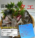 クエ鍋セット(700g)