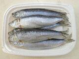 【釣りえさ】【オリジナル】【冷凍餌】イワシ(5匹入)