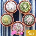 【送料無料】サボテン 3.5号鉢 アソート 5個セット 鉢植え インテリア 観葉植物 さぼてん 引越し祝い プレゼント 父の日 母の日ギフト