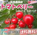 訳ありトマトベリー形は悪くても味はそのまま!!トマトベリーを沢山食べたい方に♪B級品バラ売り3kg