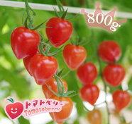 訳ありトマトベリー形は悪くても味はそのまま!!トマトベリーを沢山食べたい方に♪B級品バラ売り800g