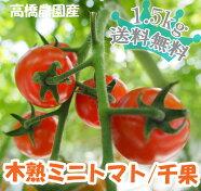 【送料無料】こだわりミニトマト1.5kg(TY千果)バラ売り・無選別品3kg【smtb-TD】【saitama】