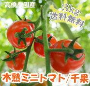 【送料無料】こだわりミニトマト3kg(TY千果)バラ売り・無選別品3kg【smtb-TD】【saitama】