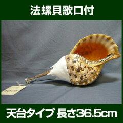 古来、仏法や戦陣に吹奏用として利用されてきた法螺貝法螺貝・クローム歌口付 サイズ36.5cm ...