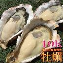 殻付き牡蠣10kg前後 約90〜110個 加熱用 産地限定(播磨灘産.相生、龍野、赤穂) ...