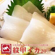 甲イカ寿司刺身新鮮口の中に広がる甘味旨味鮮度抜群