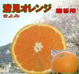 清見オレンジ 10kg 愛媛産 贈り物用 北海道・沖縄 送料別途 送料無料