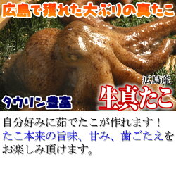 広島産の生真たこMサイズ1.5kg、半生にボイルしたお刺身はたこ本来の旨味、甘み、歯応えが味わえます!ボイルの仕方レシピ付き【夏バテ対策をしっかりと】