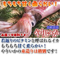 ケンサキイカ九州産約1kg(みずいか剣先いかけんさきいか白いか赤いか)