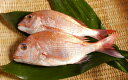 瀬戸内の天然活け鯛 500g写真は、2尾になっておりますが1尾となります。【鯛の塩釜焼き!簡単レシピ付き】