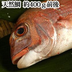 鯛(天然)瀬戸内海産400g焼き鯛用【簡単レシピ付き】(タイたい活き締め卒業合格入学お食い初め祝いに)