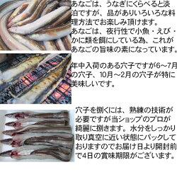 長崎産穴子(あなご)開き(1尾100g前後国産活き締め生)
