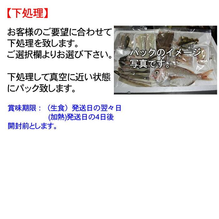 アジ 瀬戸内海産 Sサイズ(130~150g) ( 鯵 あじ 刺身 生 )