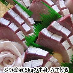 ぶり(鹿児島産もしくは瀬戸内産)約5kgの半身カマ付き(ぶり鰤)