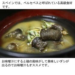 父の日送料無料亀の手(生)1kg(カメノテペルセベスかめのて鷹の爪)愛媛県産、香川県産、愛知県産のいずれか(塩ゆで、お味噌汁、バーベキューにも)