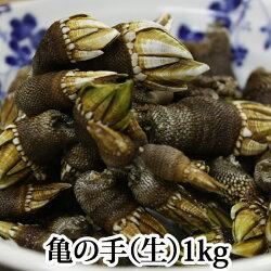 亀の手(生)1kg(カメノテペルセベスかめのて)愛媛県産、香川県産、愛知県産のいずれか(塩ゆで、お味噌汁、バーベキューにも)