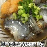 青なまこ 活き 瀬戸内海産 1kg ナマコ 海鼠 なまこ 青 生