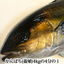 鹿児島県産 かんぱち ( 養殖 )4kgの4分の1 カンパチ...