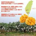 お中元 御中元 ギフト アップルマンゴー 台湾産 3玉 送料無料