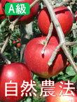 【A級品】竹嶋さんの自然農法林檎つがる<5kg>※無袋栽培