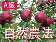 ★化学農薬・化学肥料不使用★竹嶋さんの自然農法りんご紅玉<9kg>※無袋栽培