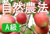 ★化学農薬・化学肥料不使用★【A級品】竹嶋さんの自然農法りんごジョナゴールド<5kg>※無袋栽培
