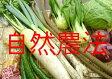 ★【5/1〜5/5発送分】たいようのおたのしみ野菜セット(自然農法/有機野菜/特別栽培いずれか) ★メニュー・セット価格は週替わりとなります。