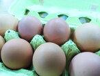 【★3/23〜25発送分(3/23入荷分)】泉さんの平飼い有精卵天恵たまご10個※有機のレモンとみかんと根菜を食べて育った鶏の卵です。