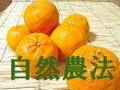 宇都宮さんのポンカン(サイズ混合)5kg※自然農法
