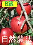 【★10/10〜19発送限定】【B級品】竹嶋有機農園の自然農法りんごつがる<約5kg>※ワケあり・傷あり家庭用※日持ちはしませんので早く食べてください。