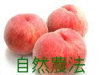 中沢さんの奇跡の桃【白鳳】又は【白桃】2kg自然農法30年、化学農薬・化学肥料不使用※発送は6月下旬〜