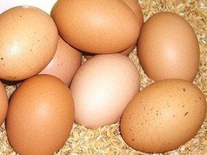 太陽食品の平飼い有精卵★「たいようの幸せたまご」10個※運動たっぷりの平飼い鶏から生まれた元気な卵です!※常温配送(6〜9月は冷蔵配送)※※現在、入荷が不安定なため、お届けまで少々お時間をいただく場合があります