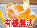 松浦さんのみかん2kg※2Sサイズ自然農法(有機JAS認定)※2月16日(土)発送分