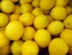 (国産・有機JAS)耕七郎おじいちゃんのレモン約2kg※サイズ混合