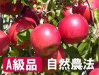 【A級品】竹嶋さんの自然農法りんご紅玉<約4.5kg>※発送は10月15日以降