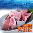 長崎県産 養殖 本マグロ アラ 約1.2kお刺身に取れる!大変お得な部位です。本マグロの頭、カマ部分を使用。