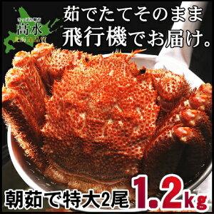 【未冷凍】北海道産 朝茹で毛ガニ 特大570g×2尾セット 【毛蟹】【毛がに】【毛ガニ 特大】…